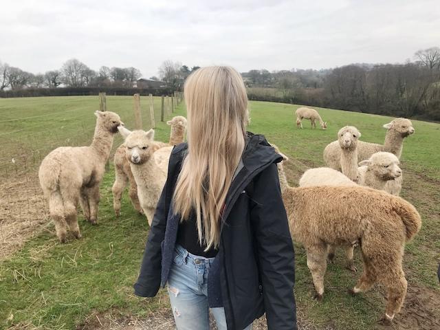 A romantic stay in Devon + llama walking + IKEA = A happy girl 🤗🌸